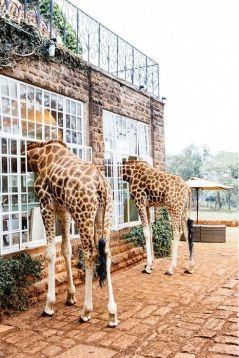 Giraffe Manor, Nairobi, Kenya